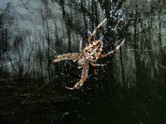 Neu in meiner Galerie bei OhMyPrints: Im Netz der Spinne
