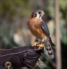 birds of arizona - Google Search