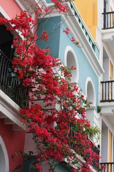 See Colombia in all its splendor: Cities, Parks, Festivals, and Culture. There are many excellent pictures and videos of Colombia and its people. A Must See Beautiful Islands, Beautiful World, Beautiful Places, Beautiful Scenery, Simply Beautiful, Beautiful Flowers, Jamaica, Places To Travel, Places To See