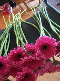 Image result for bridal bouquet fuschia long stem