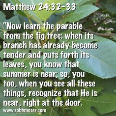 Parable of the Fig Tree Mark KJV - And seeing a fig tree afar off… King James, Sword Of The Spirit, The Tribulation, Matthew 24, Do Not Fear, Fig Tree, Knowing You, Bible, Learning