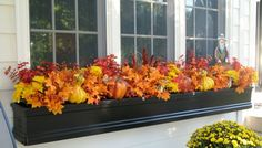 Here are our 10 must-have window box ideas including vivid fall flowers for pots, fun-filled fall window decorations, fall container plants, and more. Winter Window Boxes, Window Box Flowers, Window Planter Boxes, Planter Ideas, Autumn Lights, Garden Windows, Fall Flowers, Fall Flower Boxes, Seasonal Flowers
