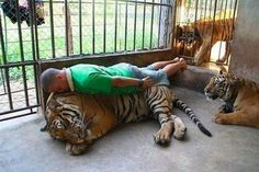 This dude planking on a tiger. | 42 People You Won't Believe Actually Exist
