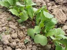 10 Quick-Growing Vegetables You Can STILL Plant In August From Seed
