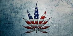 Cần sa được hợp pháp ở đâu trên đất Mỹ - Cannabis Vietnam - Cần sa Việt Nam…