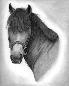 Custom equine portrait of a lesson pony. Click on link for more information about ordering your own custom pet portrait. Perfect gift for the pet lover or horse lover.