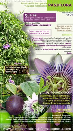 Passiflora or passion flower. Summary of the general characteristics of the Passiflora plant. Medicinal properties, benefits and uses more common of Passion flower. Treats insomnia, palpitations, migraine, etc. Healing Herbs, Medicinal Plants, Herbal Medicine, Natural Medicine, Natural Cures, Natural Healing, Natural Treatments, Passion Flower, Herbal Remedies