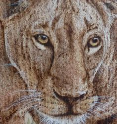 Pyrography on wood. Lioness. https://www.facebook.com/OfMiArt