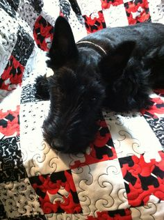 Pet or Baby Quilt Blanket-Scottie Dog Black White and Red. $125.00, via Etsy.