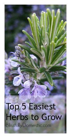 Top 5 Easiest Herbs to Grow