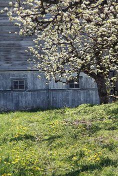 Haus + Baum + Wiese = tolles Frühlingsfoto
