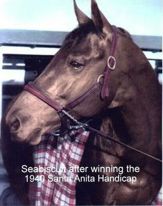 Seabiscuit ..what an amazing little underdog horse who blew everyone out of the water..
