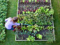 Gemüsebeet Mehr