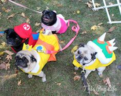 Super Mario Pugs (Pug is on the right, dressed as Bowser)