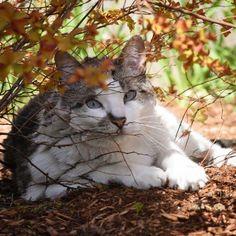 We Have a Cat http://espressoshotcreations.myfreesites.net/esc-blog/we-have-a-cat