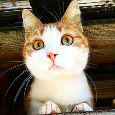 "Călătoria lui ""îmi pasă"" , pe inimi ne apasă! – Mihaela Vicol Blogging, Cats, Animals, Gatos, Animales, Animaux, Animal, Cat, Animais"