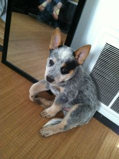 One of the cutest puppies I've ever seen!