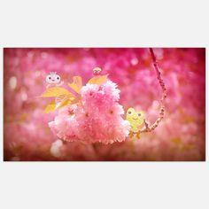 Fab.com   Cherry Blossoms 11x20
