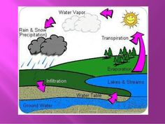 Discovering and Understanding the Process of the Water Cycle Elementary Science CORE Curriculum as per NYSED. Science Lessons, Teaching Science, Science Education, Teaching Resources, Science Ideas, Outdoor Education, Mad Science, Weird Science, Teaching Ideas