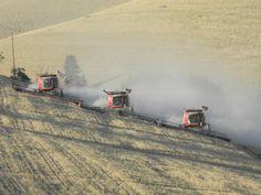 Wheat harvest; Waitsburg area