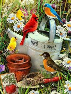 Paint by Number Junior-Bird Garden by craftitinc on Etsy Pretty Birds, Love Birds, Beautiful Birds, Image Nature, Cardinal Birds, Paint By Number Kits, Bird Pictures, Cardinal Pictures, Colorful Birds