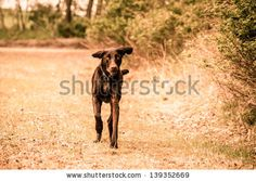 Vintage dog portrait by Kasper Nymann, via Shutterstock