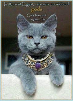 Egyptian cat pin.
