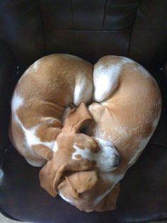 Deux Chiots endormis l'un contre l'autre de façon à former un Coeur