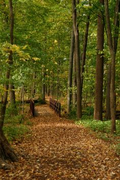 An autumn day walking towards a iron bridge in the Morton Arboretum…one of my favorite spots to hike.