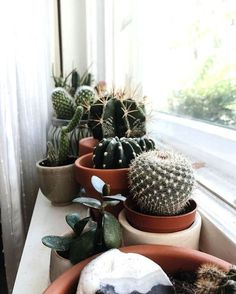 benefits of cactus plant in home these are just too cute succulent cactus plants. - benefits of cactus plant in home these are just too cute succulent cactus plants plant lady window - Cacti And Succulents, Potted Plants, Indoor Plants, Succulent Planters, Indoor Cactus, Indoor Herbs, Succulent Containers, Hanging Planters, Hanging Baskets