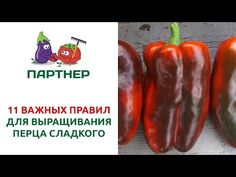Stuffed Peppers, Vegetables, Food, Youtube, Red Peppers, Stuffed Pepper, Essen, Vegetable Recipes, Meals