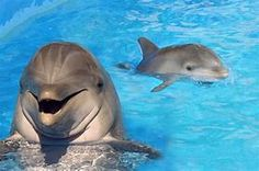 Image result for Baby Dolphins