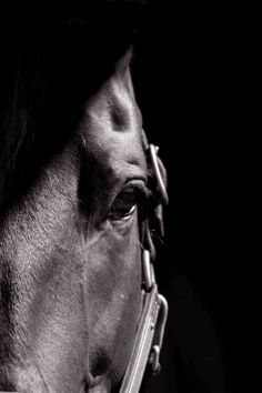 Horse Photography Black and white horse by moonlightphotography, $28.00