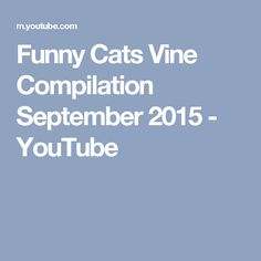 Funny Cats Vine Compilation September 2015 - YouTube