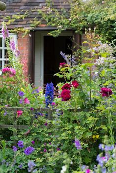Quaint English Cottage Garden with Delphiniums Roses Foxglove