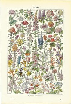 Vintage language of FLOWERS print - French Dictionary Illustration - 1948 via