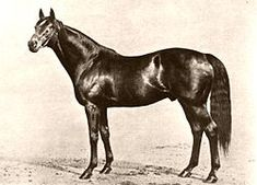 Phalaris (1913–1931) was a British bred Thoroughbred racehorse, later a Leading sire in Great Britain and Ireland and a Leading broodmare sire in Great Britain & Ireland. He appears in the sireline (stallion to stallion) of all nine racehorses which were winners of more than 10 million dollars!