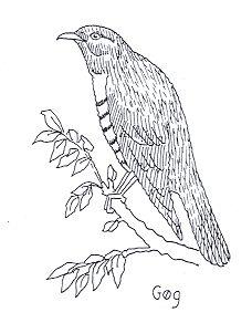 Lær skovens fugle at kende