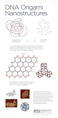Rare form: novel structures built from DNA emerge