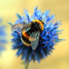 Bumble Bee by Adam-F.deviantart.com on @DeviantArt