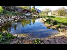 feature pond ideas nz - Google Search