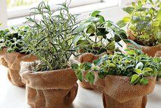Cheaper than plant pots