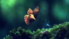 hd pics photos beautiful butterfly macro attractive nature hd quality desktop background wallpaper