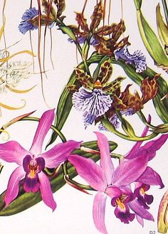 Vintage botanical prints.