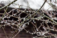 #roco #ice #weather #cold @wxbrad @rowan_county_wx #trees #frozen #kannapolis