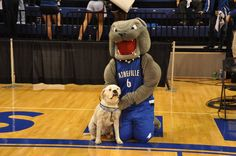 University of North Carolina - Ashville Bulldogs. Rocky. The nickname comes from the students' tenacious, strong and courageous attitudes.