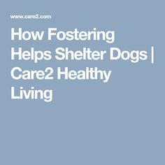 How Fostering Helps Shelter Dogs  | Care2 Healthy Living