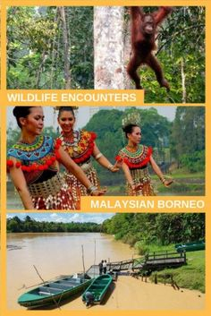 Wildlife Encounters in Malaysian Borneo. Y ou can experience unspoilt nature up close. Get within sniffing distance of tiny wild piglets, watch Proboscis monkeys swing through the trees, and see endangered orangutans.