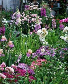 cottage garden: roses, iris, foxglove, alstroemeria