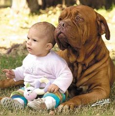 """hey have such a face ..) as if the kid says - """"not naughty) A dog responds -"""" Okay, I'll try ... """""""